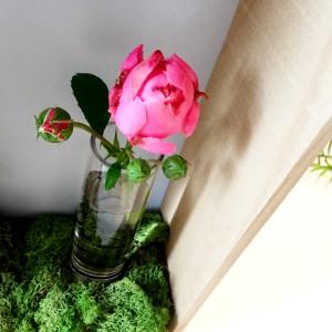 Rose einsetzen